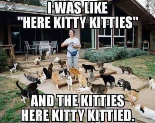 "animal meme - Canidae - IWAS LIKE ""HERE KITTY KITTIES"" AND THE KITTIES HERE KITTY KITTIED"