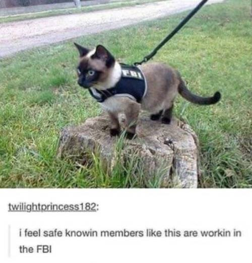animal meme - Vertebrate - twilightprincess182: i feel safe knowin members like this are workin in the FBI