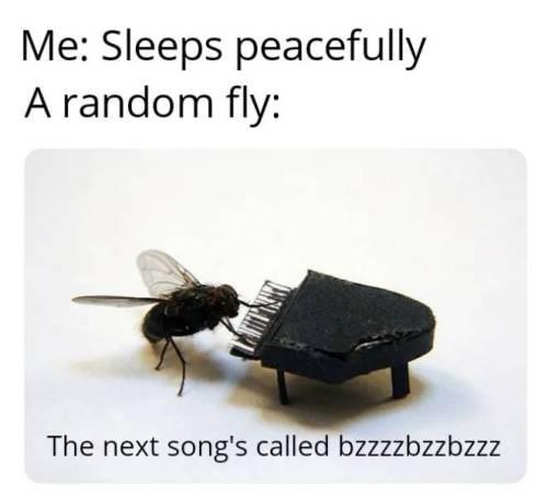 animal meme - house fly - Me: Sleeps peacefully A random fly: The next song's called bzzzzbzzbzzz