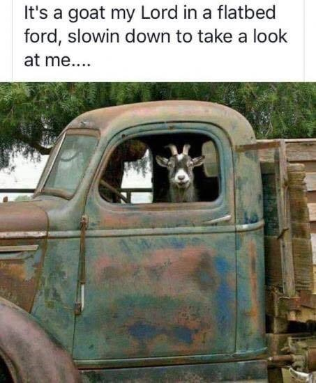 animal meme - Motor vehicle - It's a goat my Lord in a flatbed ford, slowin down to take a look at me....