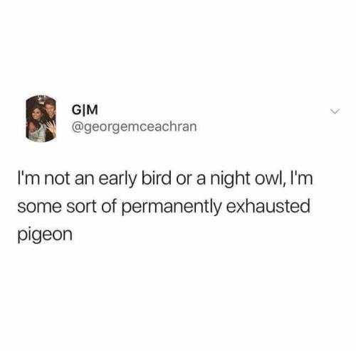 animal meme - Text - GIM @georgemceachran I'm not an early bird or a night owl, I'm some sort of permanently exhausted pigeon