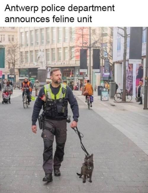 animal meme - Street dog - Antwerp police department announces feline unit