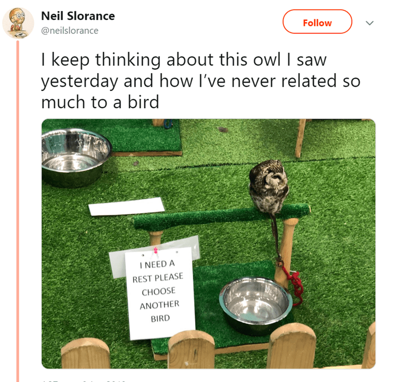 Grass - Neil Slorance @neilslorance Follow I keep thinking about this owl saw yesterday and how I've never related so much to a bird INEED A REST PLEASE CHOOSE ANOTHER BIRD