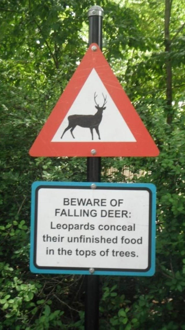 Sign - BEWARE OF FALLING DEER: Leopards conceal their unfinished food in the tops of trees.