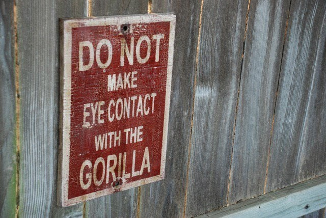 Text - DO NOT MAKE EYE CONTACT WITH THE GORILLA