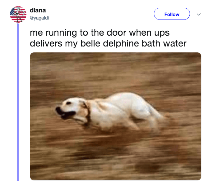 Dog - diana Follow @yagaldi me running to the door when ups delivers my belle delphine bath water