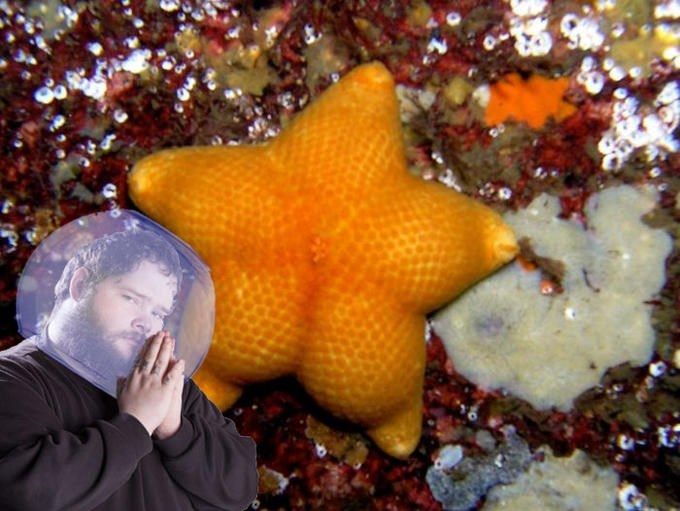 fat orange starfish and man praying to it with fish bowl on his head