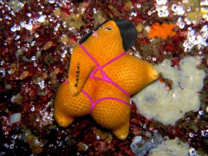 fat orange starfish turned into sexy woman