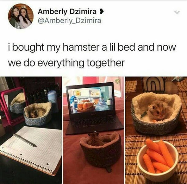 wholesome meme - Meal - Amberly Dzimira @Amberly Dzimira ibought my hamster a lil bed and now we do everything together
