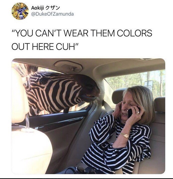 "Meme - ""YOU CAN'T WEAR THEM COLORS OUT HERE CUH"" - Zebra"
