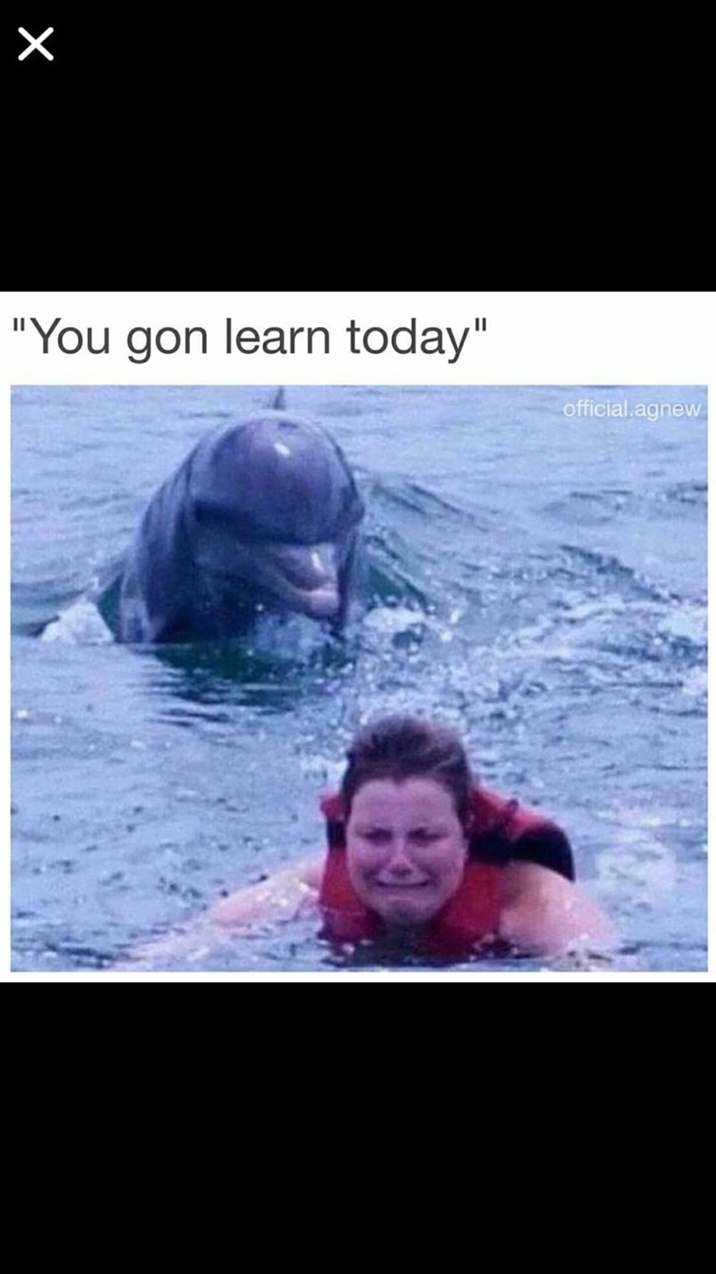 "Meme - Marine mammal - ""You gon learn today"" official.agnew X"