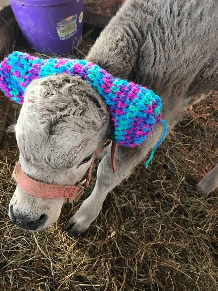baby cows ear muffs - Wool