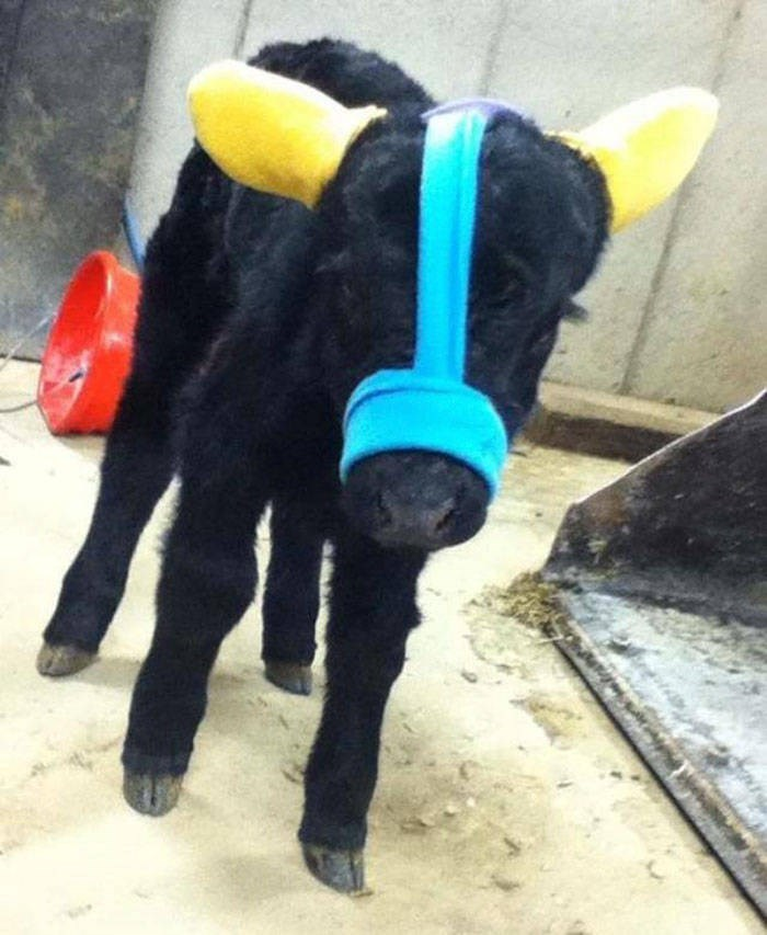 baby cows ear muffs - Yellow