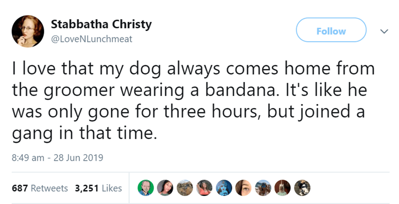 animal tweet - Text - Stabbatha Christy Follow @LoveNLunchmeat I love that my dog always comes home from the groomer wearing a bandana. It's like he was only gone for three hours, but joined a gang in that time. 8:49 am - 28 Jun 2019 687 Retweets 3,251 Likes