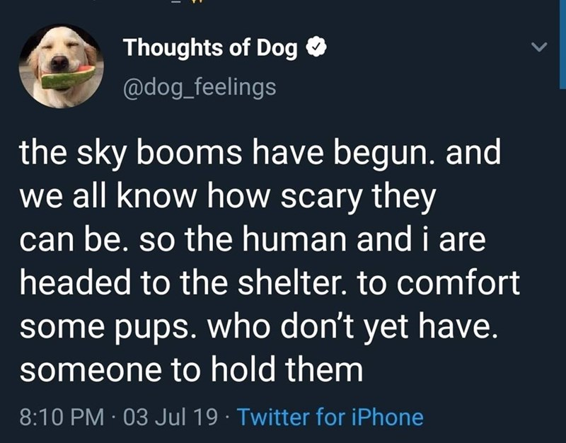 tweet by a dog about july 4th fireworks