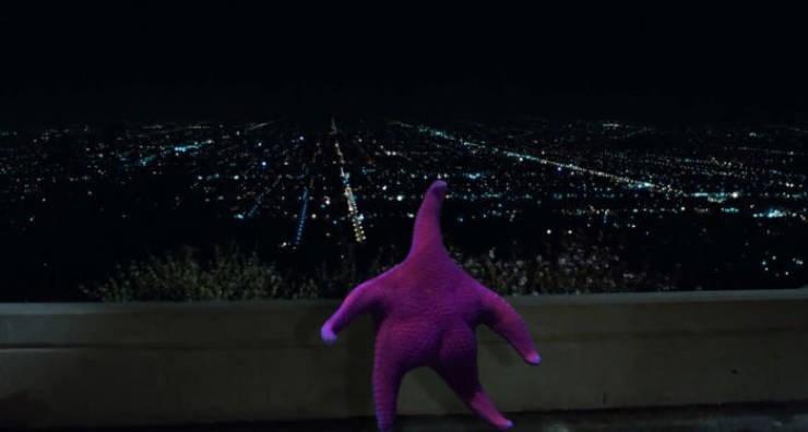 thick starfish - Purple