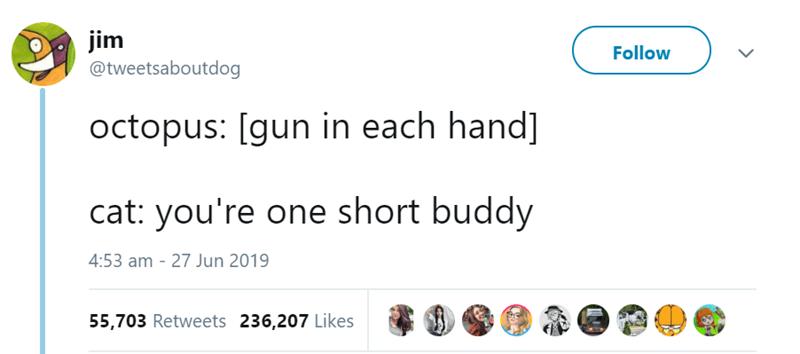animal tweet - Text - jim @tweetsaboutdog Follow octopus: [gun in each hand] cat: you're one short buddy 4:53 am 27 Jun 2019 55,703 Retweets 236,207 Likes