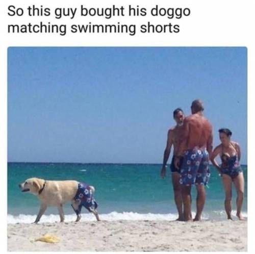 animal meme - Vacation - So this guy bought his doggo matching swimming shorts