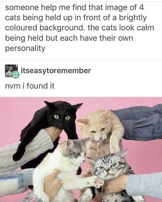 animal meme - Cat - someone help me find that image of 4 cats being held up in front of a brightly coloured background. the cats look calm being held but each have their own personality itseasytoremember nvm i found it