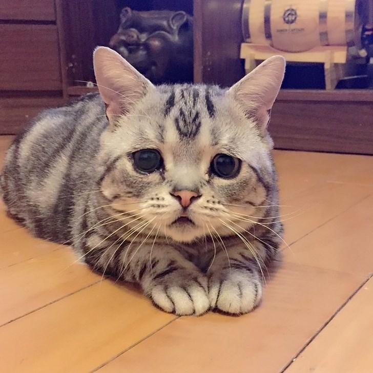 disabled pet - Cat