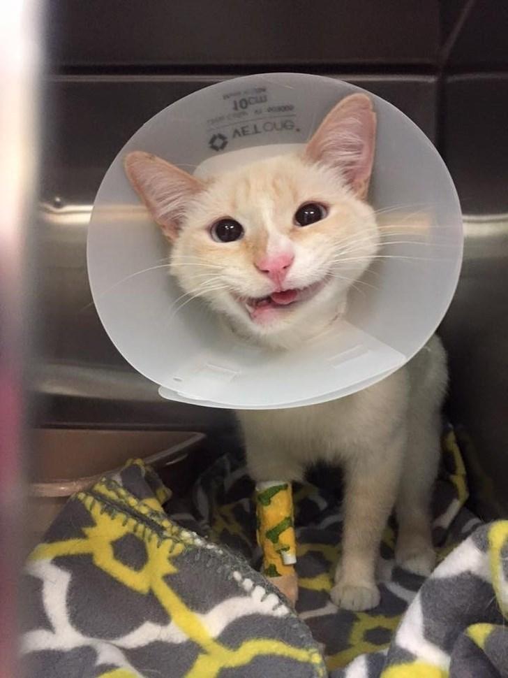 disabled pet - Cat - AELOUG