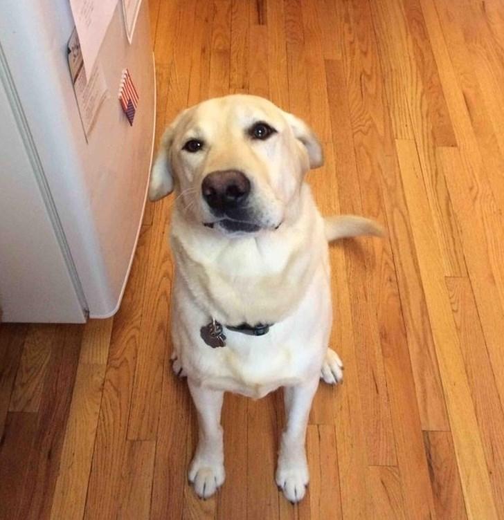 disabled pet - Dog