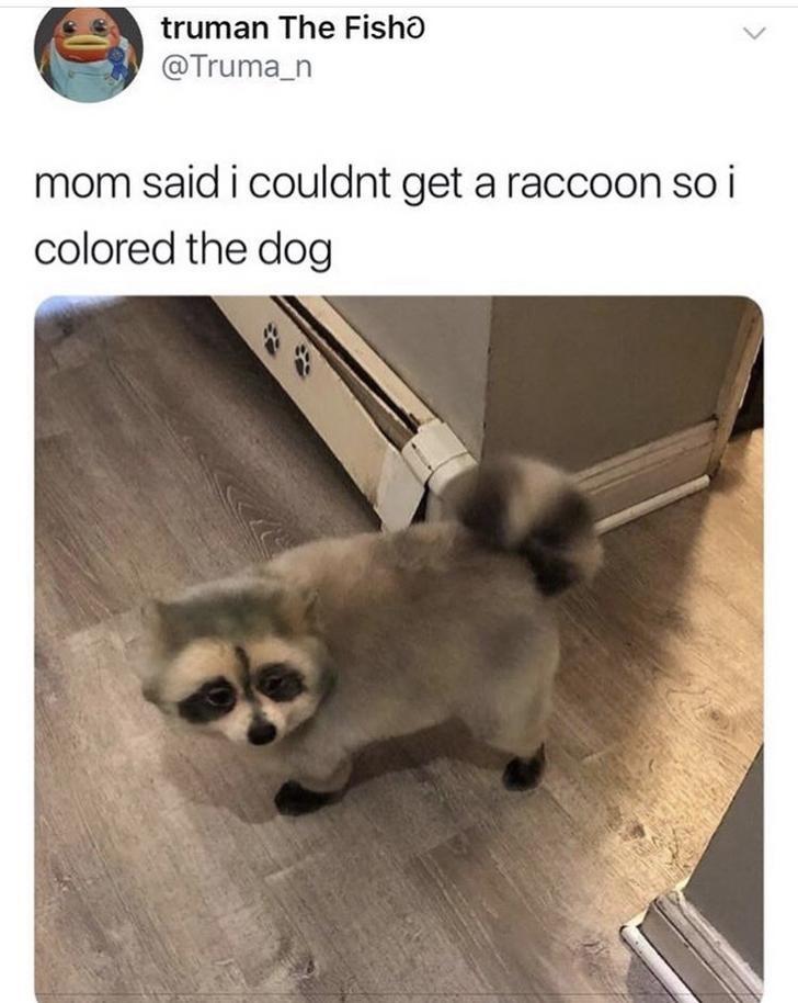aww dogs panda cute - 9327802368