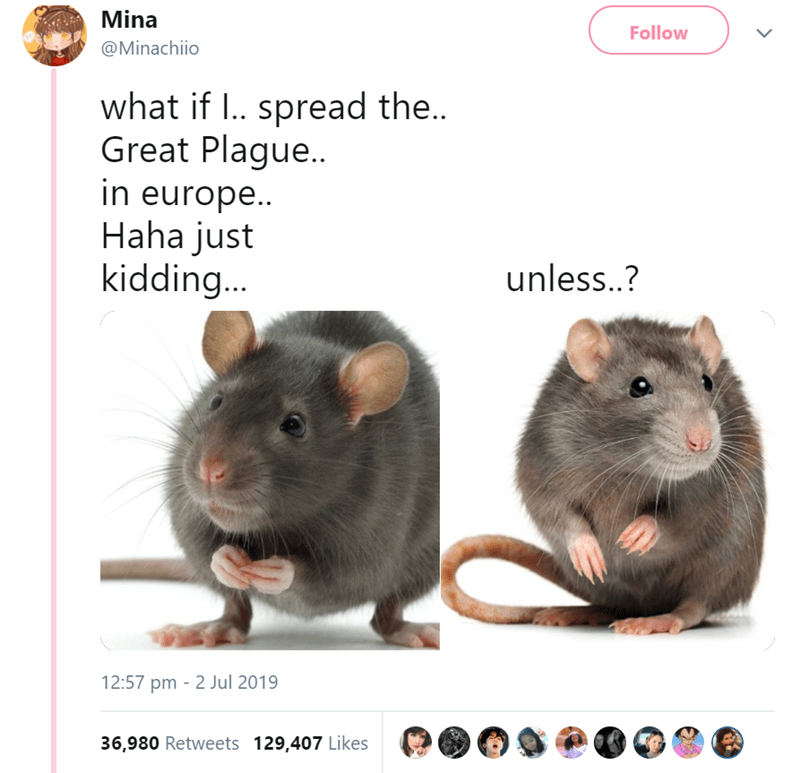 funny women - Rat - Mina Follow @Minachiio what if I.. spread the.. Great Plague... in europe.. Haha just kidding... unless..? 12:57 pm 2 Jul 2019 36,980 Retweets 129,407 Likes