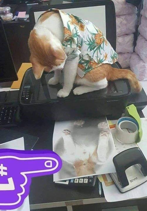 cat wearing a Hawaiian shirt