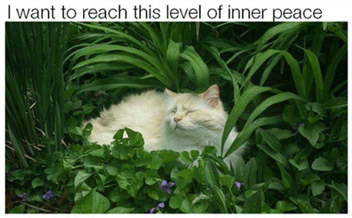cat meme about mood goals