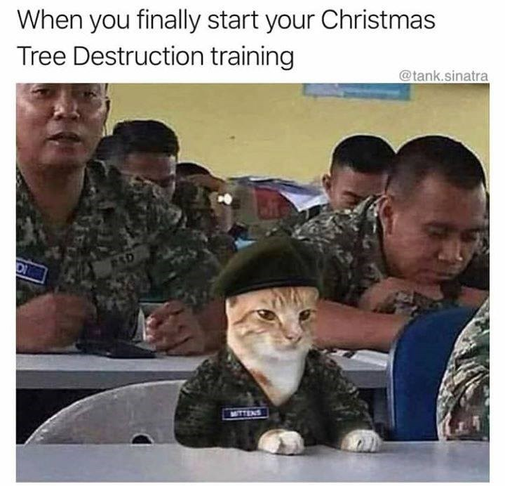 cat dressed in army uniform learning about how to destroy the christmas tree
