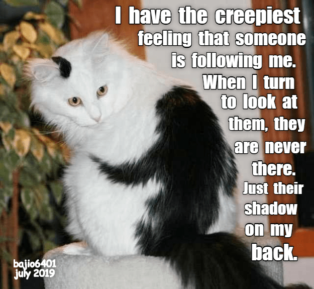 Cheezburger Image 9327908608