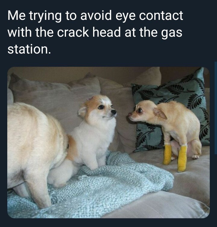 meme - Canidae - Me trying to avoid eye contact with the crack head at the gas station.