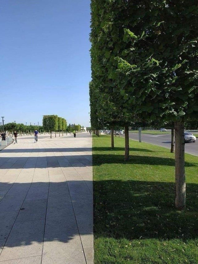 Tree, grass, street and perfect line