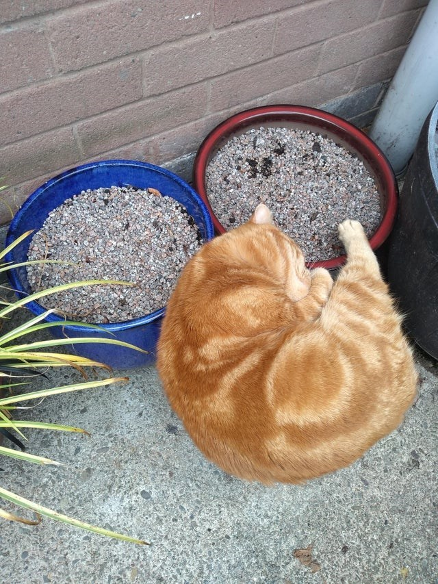 cat litter and perfect looped cat sleeping