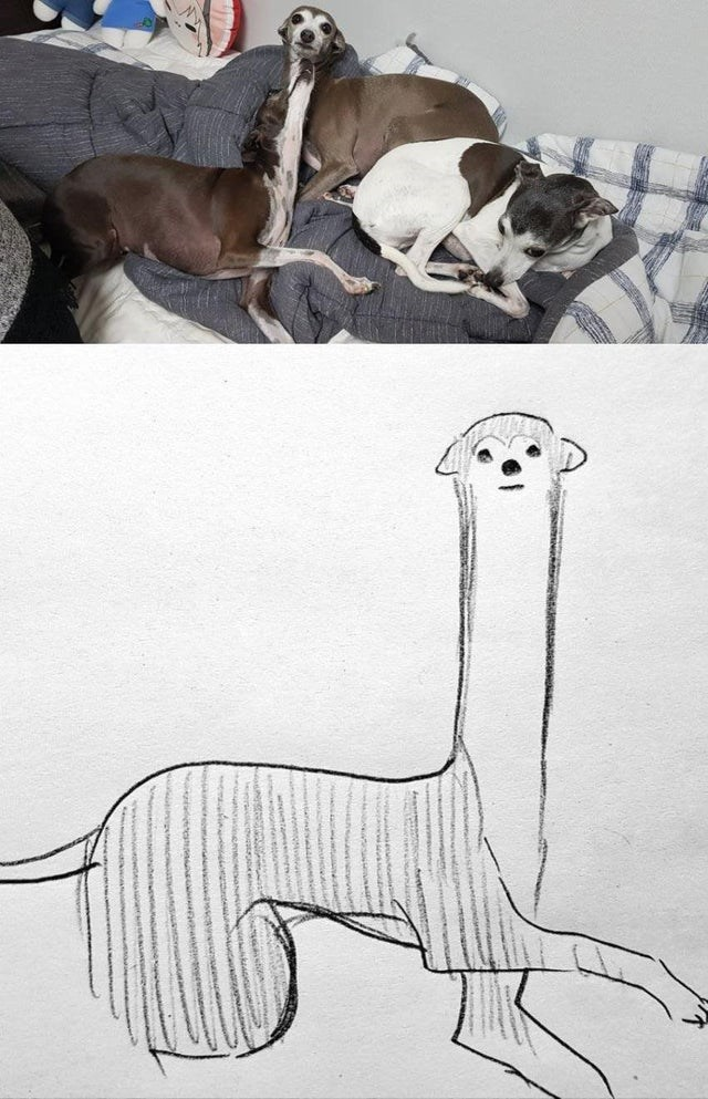 three whippet dogs lying on a bed and a pencil drawing of a whippet