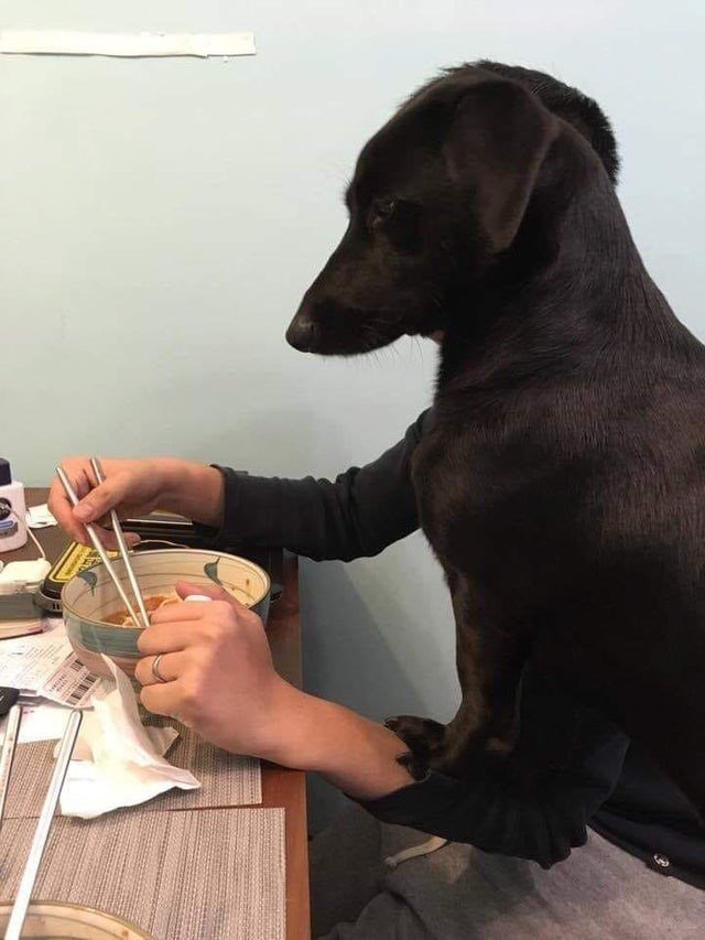 Dog sitting on man looks like it has arms and is eating noodles at a table