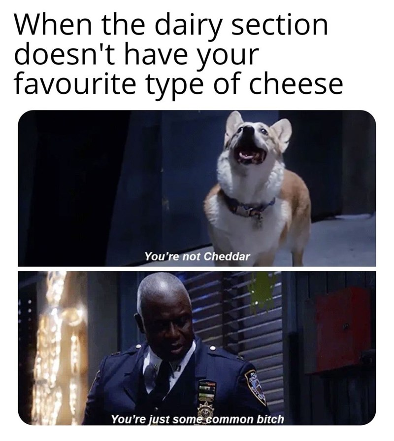 brooklyn 99 meme - Canidae - When the dairy section doesn't have your favourite type of cheese You're not Cheddar You're just some common bitch