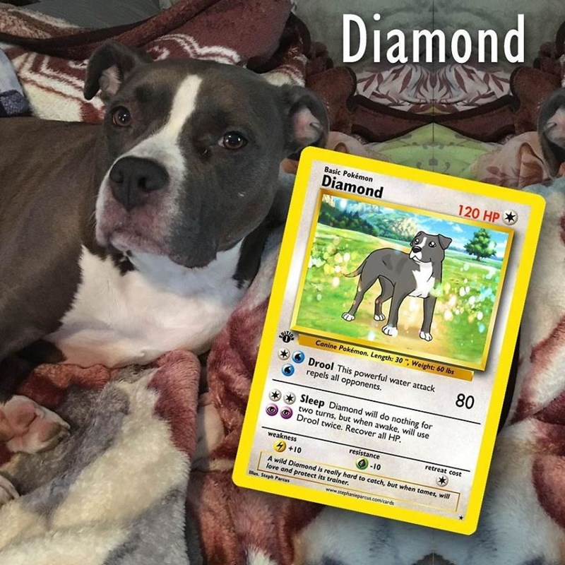 pokemon card - Dog breed - Diamond 8asic Pokémon Diamond 120 HP Canine Pokémon. Length: 30 , Weight: 60 lbs Drool This powerful water attack repels all opponents. 80 Sleep Diamond will do nothing for two turns, but when awake, will use Drool twice. Recover all HP weakness resistance retreat cost +10 -10 A wild Diamond is really hard to catch, but when tames, will love and brotect its trainer. lus. Steph Parcus www.stephanieparcus.com/cards