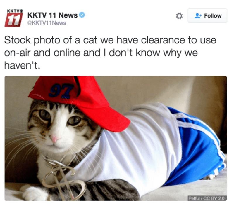 cat tweet