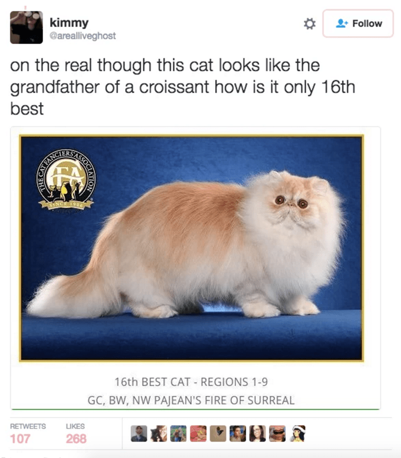cat tweet - Cat - kimmy @arealliveghost Follow on the real though this cat looks like the grandfather of a croissant how is it only 16th best SINCE 1906 16th BEST CAT REGIONS 1-9 GC, BW, NW PAJEAN'S FIRE OF SURREAL RETWEETS LIKES 107 268 HE CATEN