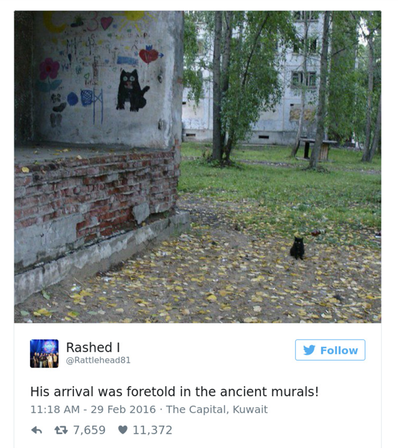 cat tweet - Text - Rashed I Follow @Rattlehead81 His arrival was foretold in the ancient murals! 11:18 AM - 29 Feb 2016 The Capital, Kuwait 7,659 11,372
