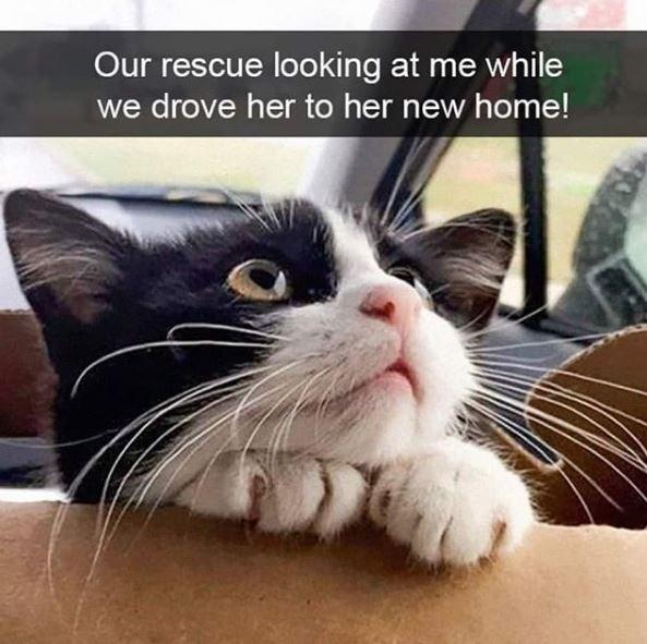aww kitten cute love - 9328709120