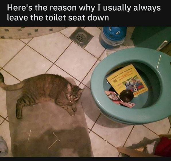 toilet Cats funny - 9328710144