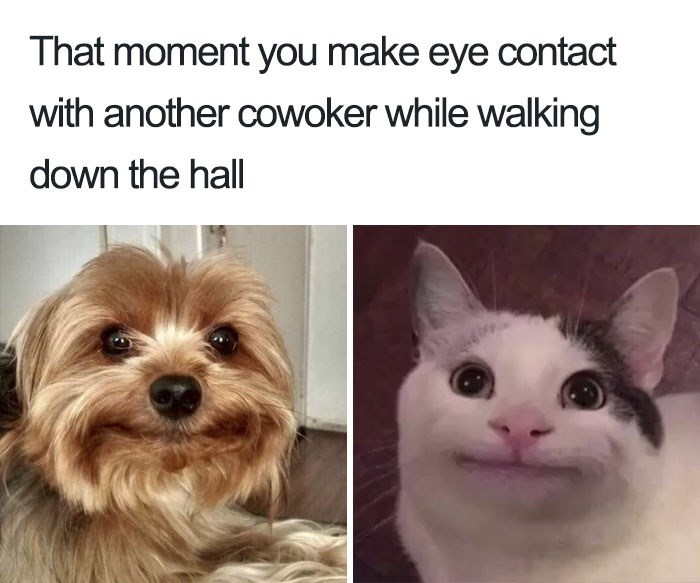 meme - Dog breed - That moment you make eye contact with another cowoker while walking down the hall