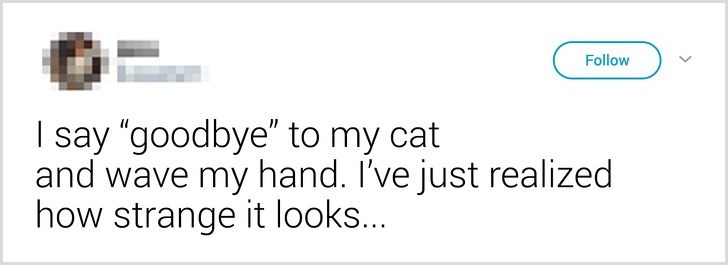 """Text - Follow I say """"goodbye"""" to my cat and wave my hand. I've just realized how strange it looks..."""