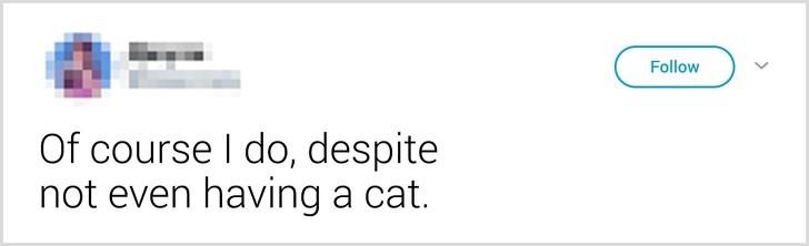Text - Follow Of course I do, despite not even having a cat.