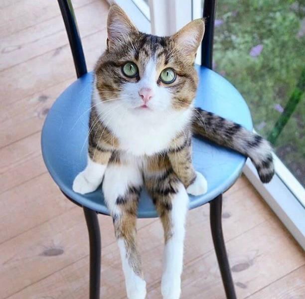 sitting weird - Cat