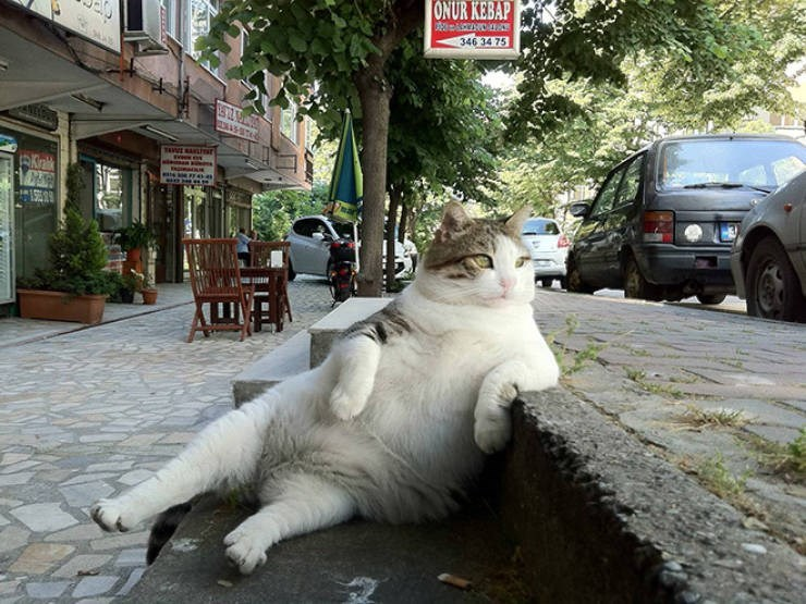 sitting weird - Mammal - ONUR KEBAP 346 34 75 TAWE RATar