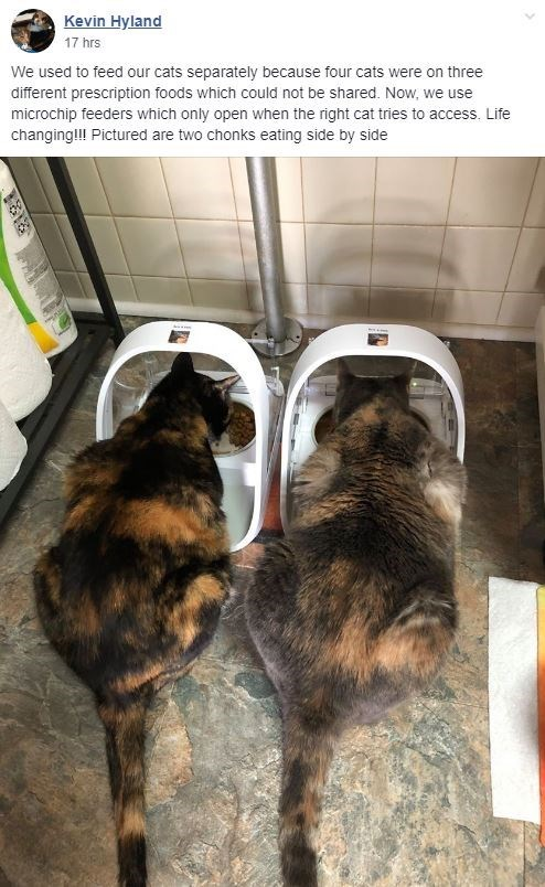 cat chonkers - Kevin Hyland 17 hrs We used to feed our cats separately because four cats were on three different prescription foods which could not be shared. Now, we use microchip feeders which only open when the right cat tries to access. Life changing!l Pictured are two chonks eating side by side
